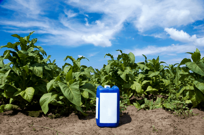 The Best Organic Herbicides for Weeds