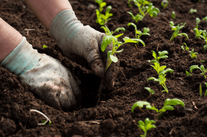 Paper Pot Transplanter Review 2019 – Is This the Future of Organic Gardening?