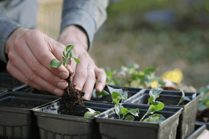 4 Simple Ways to Feed Your Garden the Right Organic Nutrients
