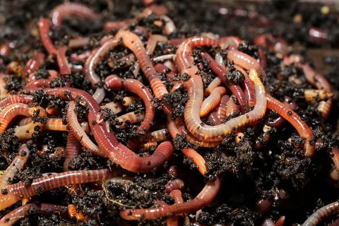 Organic Solution Premium Worm Castings: Natural Nutrients for Plants
