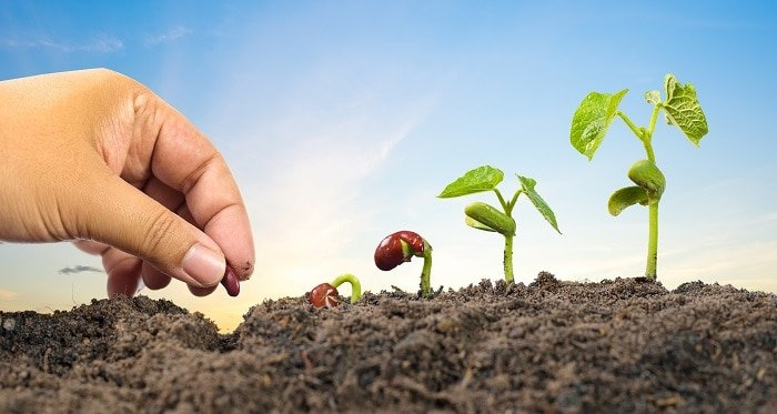 """""""4 Useful Tips to Help You Choose the Best Organic Seed Starting Mix"""""""