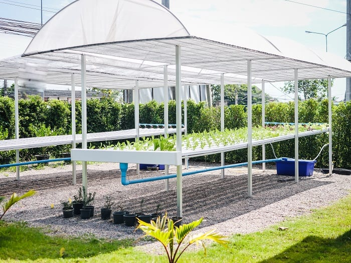 Is It Time to Switch to Hydroponics?