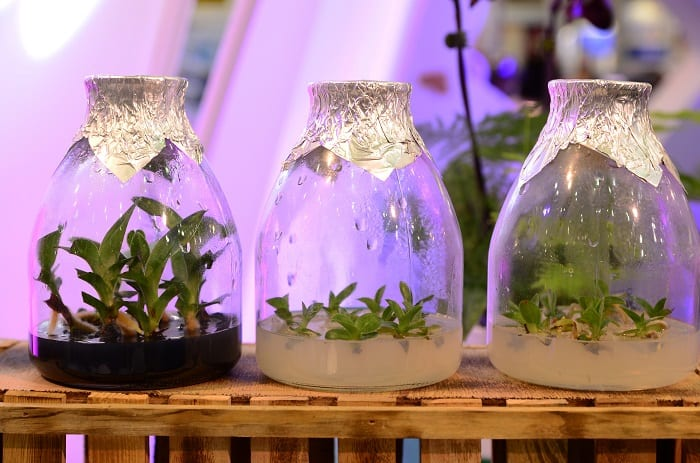 How to Clone a Plant with Water
