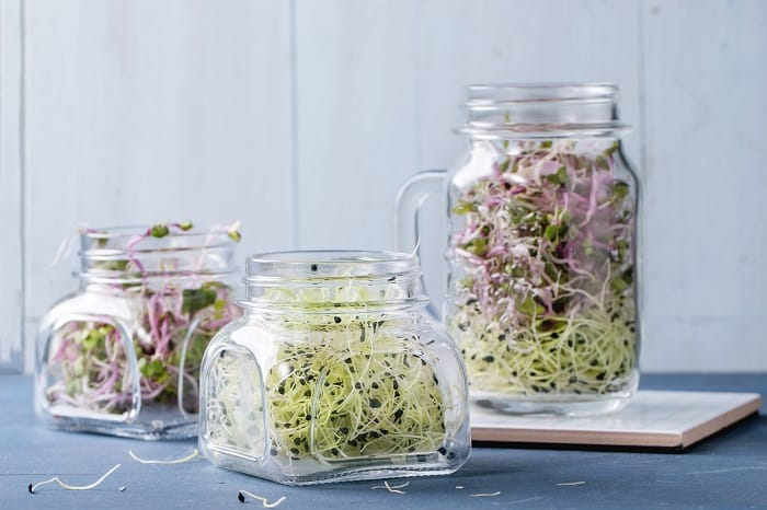 How to Grow Alfalfa Sprouts?